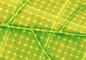 Biomimicry-Leaf.CellPanel