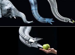 Biomimicry-PHOTO1