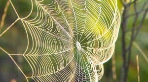 Bucky.SacredGeometry-SpiderWeb