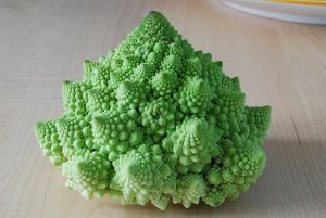 Bucky.ScredGeometry-CauliflowerFractal